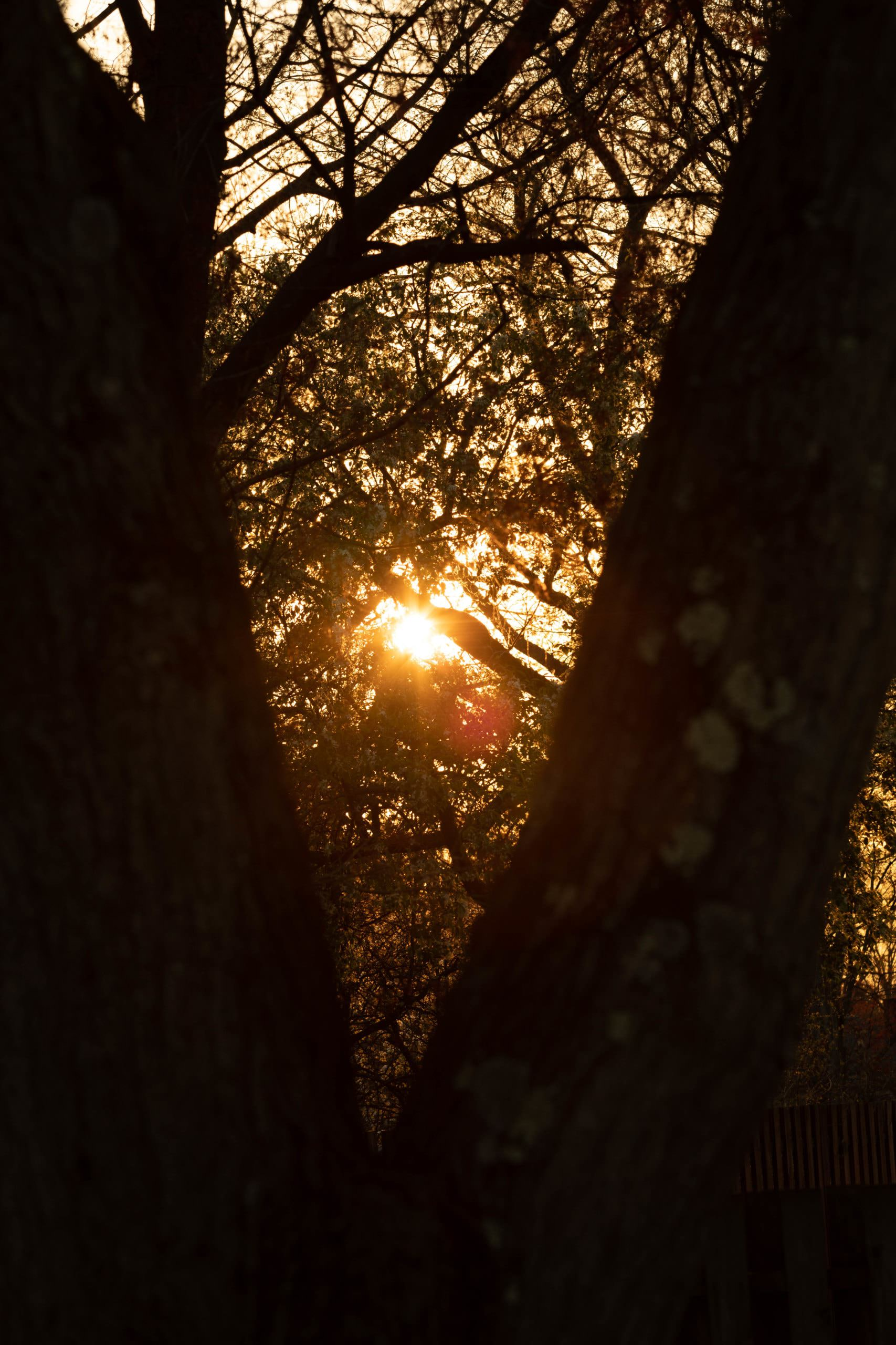 Sunset between trees in Cherry Hill NJ.